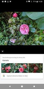 Noch arbeitet Google Lens nicht zuverlässig