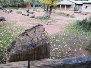 Entferntere Objekte werden im Modus Große Blende nicht immer zuverlässig erfasst, das spätere Scharfstellen funktioniert dann nur unbefriedigend (Fokus auf dem Känguru in der Mitte)